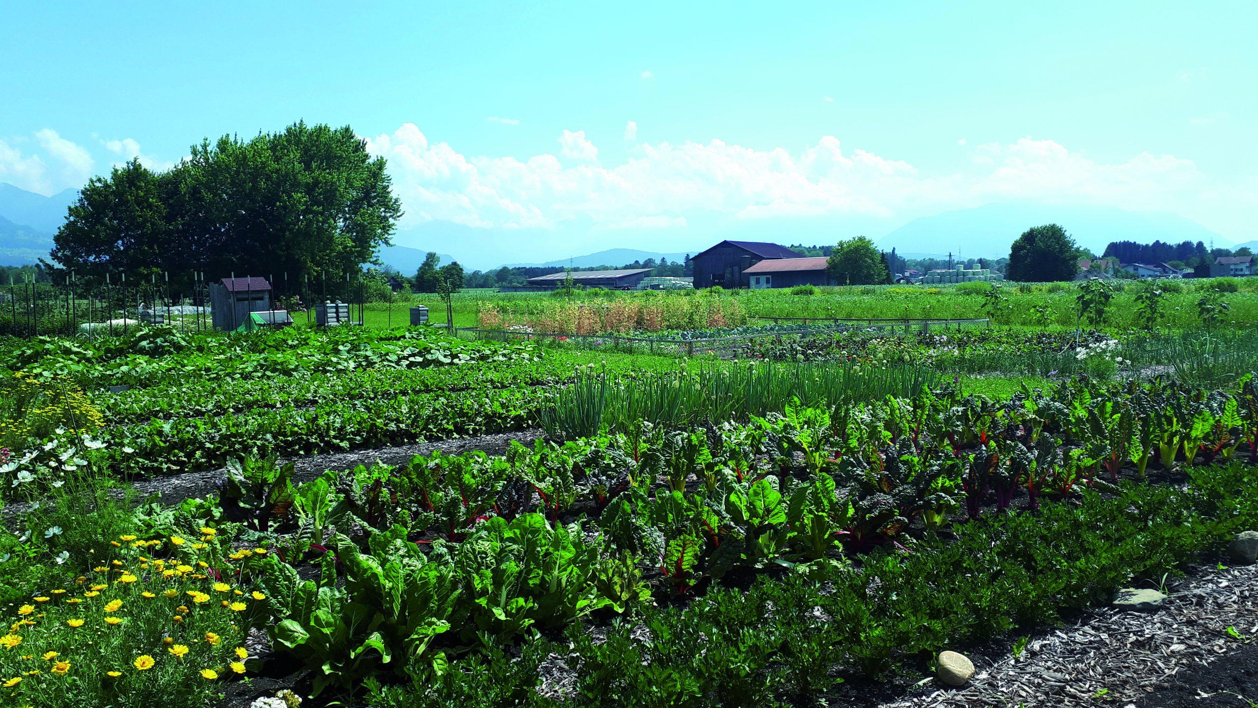 Auszeit auf dem Gemüsefeld
